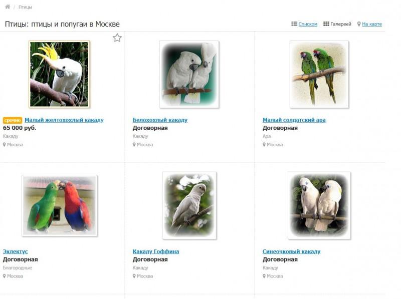 продать попугая быстро