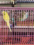 Корелла , неразлучники , Волнистые попугайчики .