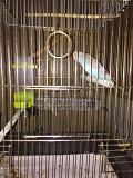 Продаётся волнистый попугайчик с клеткой