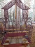 Волнистый попугаи с клеткой