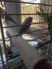 Попугаи получехи волнистые