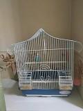Волнистая попугайка