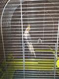 Птица папугай