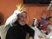 Попугай Какаду говорящий