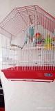 Попугай+клетка