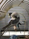 Попугай ввп чех