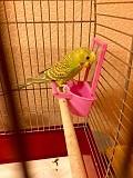 Продам волнистого попугайчика.
