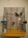 Два попугая неразлучника с клеткой