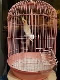 Корелла попугай +клетка