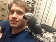 Птенец Выкормыш Жако Джек Попугай Крупный