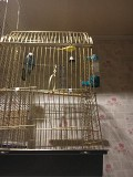 Волнистый попугайчик ищет новый дом