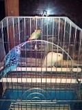 клетка +2 попугая