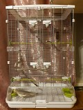 Попугай Корелла, девочка, 1.5 года + клетка