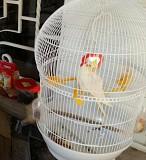 4 попугая, 2 клетки