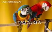 Корма, витамины, минеральные добавки для попугаев из Европы