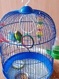Волнистые попугайчики (вместе с клеткой)