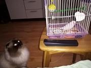 Волнистый попугайчик с клеткой