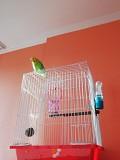 Продам волнистого попугайчика вместе с клеткой