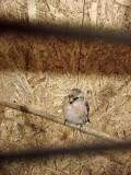 Лесные певчие птицы