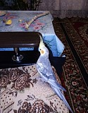 Попугай корелла(нимфа)