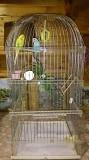 2 волнистых попугая + 2 клетки