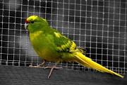 продажа декоративной птицы