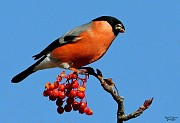 Птицы певчие!