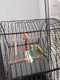 Волнистые попугайчики самец +самка+клетка +игрушка