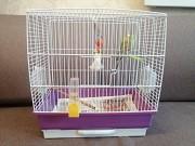 Пара попугаев с клеткой