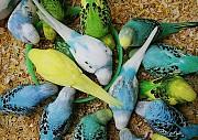 Весёлые друзья попугаи
