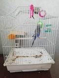 Попугай волнистый с клеткой