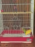 Попугаи неразлучники с клеткой