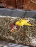 Попугай Какарик с клеткой