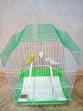 Попугаи (пара) + клетка