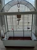 Продам птичку амадина с клеткой
