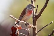 Лесные певчие птицы.
