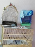 Декоративные певчие птицы, клетки разные