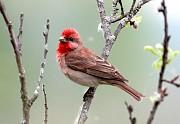 лесные певчии птицы