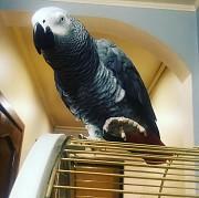 Попугай Жако!