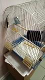 Волнистый попугай+ клетка