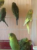 Банда попугаев