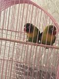 Масковые попугаи ВМЕСТЕ С БОЛЬШОЙ КЛЕТКОЙ