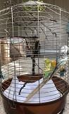 Волнистые попугаи с просторной клеткой