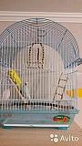 Волнистые попугайчики пара с клеткой
