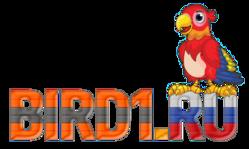 Купить попугая на Bird1.ru