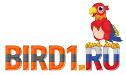 Bird1.ru
